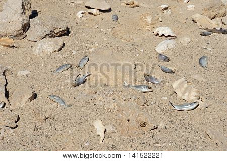 Dry Shell