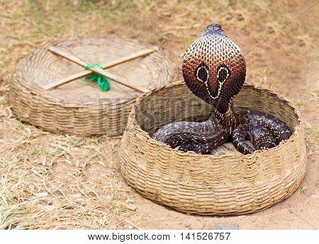 dance Cobra animal Performance Of Snake Charmer.
