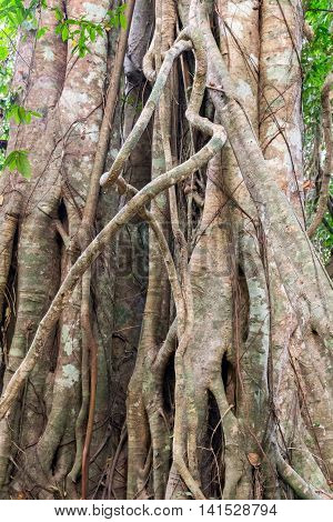 Rain Forest Tropical