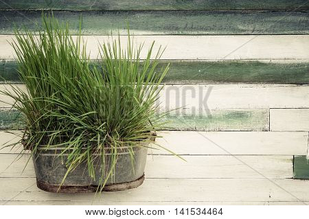 Old wood plank wall background with a metal bucket of green grass