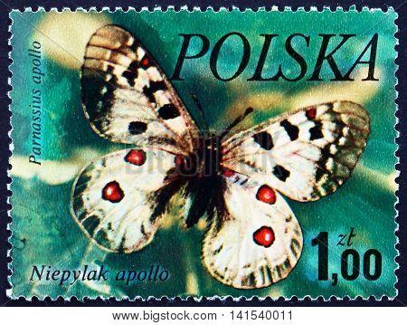 POLAND - CIRCA 1977: a stamp printed in the Poland shows Mountain Apollo Parnassius Apollo Butterfly circa 1977