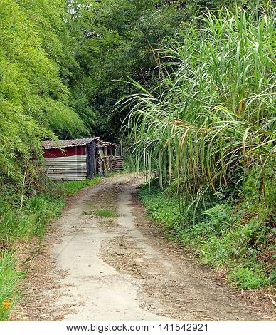 An old forest road leading past some old sheds
