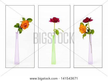 Three images of roses in glass vases on a plain background