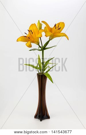 an orange lily in a brown glass vase on a plain background