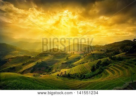 Rice fields on terraced in sunset at Mu chang chai Yen bai Vietnam. Rice fields prepare the harvest at Northwest Vietnam