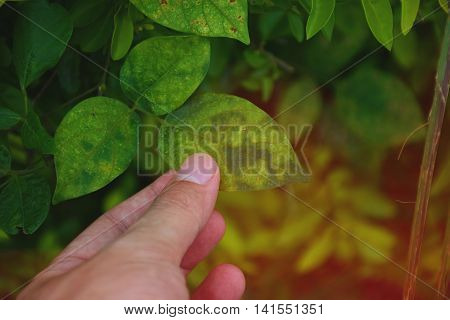 Hand touch a green leaf. take care. take care of nature.