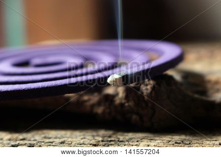close up burning mosquito coil with smoke for anti insect