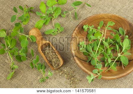 Portion of fresh Oregano. Oregano spices traditional pizza.