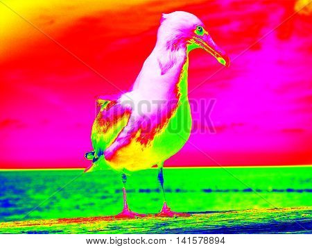 Infra Scan, Thermography Photo. Seagull Stay On Wooden Handrail. Big Bird Looking Into Camera