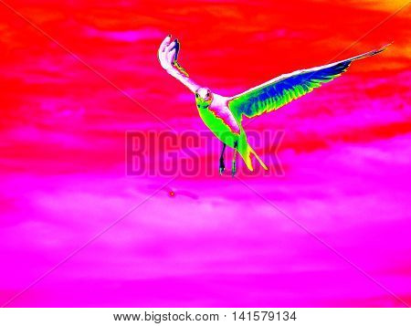 Infra Scan, Thermography Photo.wild Seagull Fly In Sky And Looking Into Camera