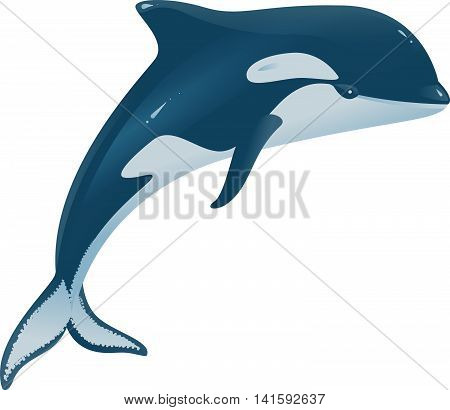 Orcinus orca marine mammal. Isolated on white vector illustration
