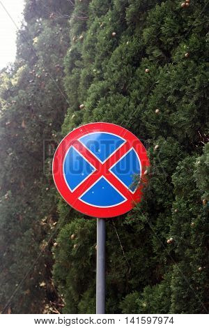 round road sign clear way no stopping among green cypresses in forest