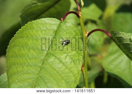 close photo of a small fly on the green leaf