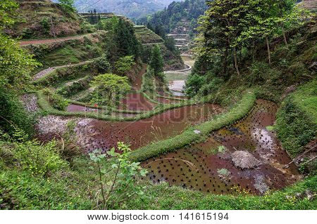 Rice terraces in the mountains of southwestern China flooded rice fields near Jilun Dong Village Guizhou Province cloudy spring day.