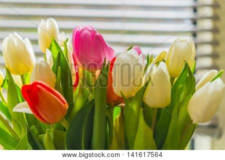 Colorful Tulip Flower Bouquet In Vase Against Window Blind