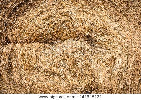 Haystack Close-up