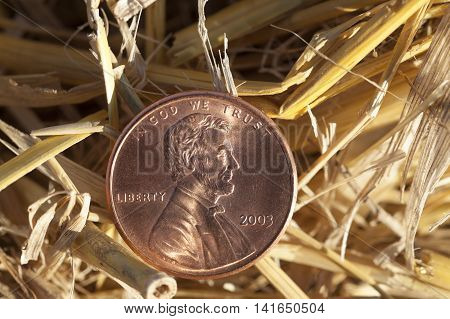 photographed close-up of an American penny in a pile of straw left after harvest poster
