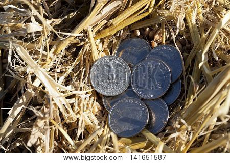 photographed close-up of an American coin in 25 cents in a pile of straw left after harvest