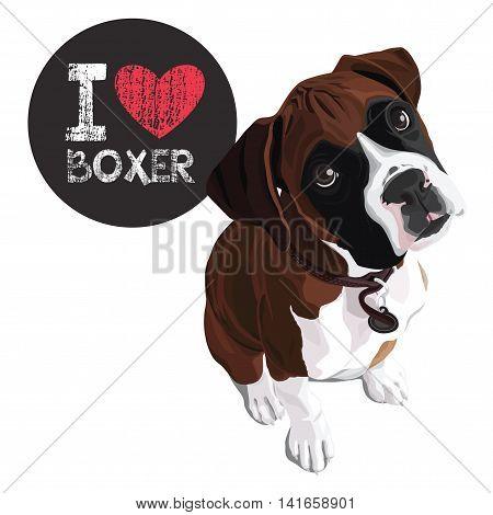 vector closeup portrait of the domestic dog Boxer breed