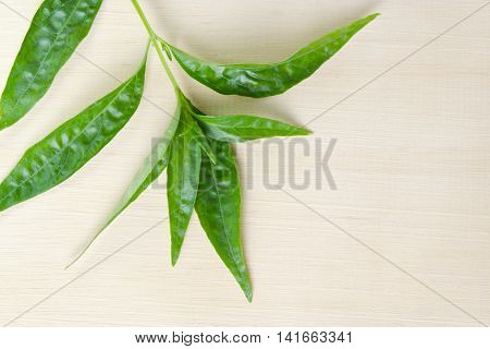Green Chirayta, King Of Bitters Leaf Isolated On Wood Background