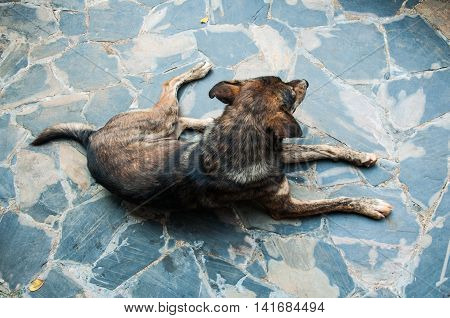 The stray dog in street at Thailand