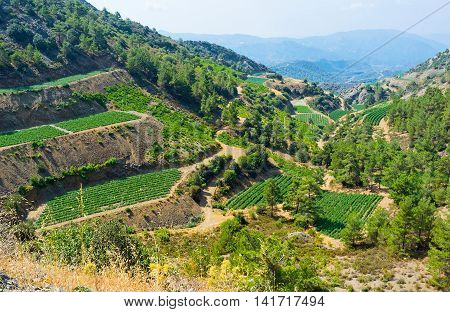 The agriculture lands in Troodos mountains the terraced gardens planted on the slopes Gourri Cyprus.