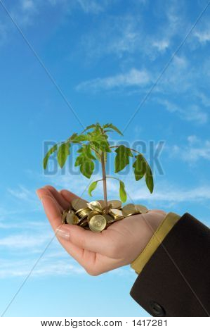 Plant In Handful Of Golden Coins