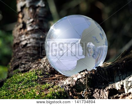 Bowl with a winter landscape in a green forest. Glass - a material concepts and themes global warming climate change seasons environment nature.