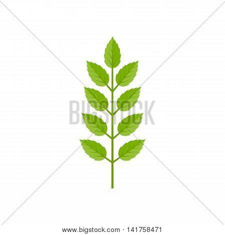 branch of green leave illustration vector, flat design