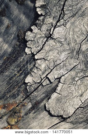 abstract background or texture detail of the old degenerate bark