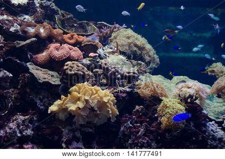 The artificial ocean bottom in big aquarium