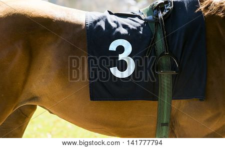 Horse Racing, Close Up On Brown Horse With Number 3