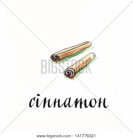 Cinnamon sticks hand drawn - watercolor Illustration