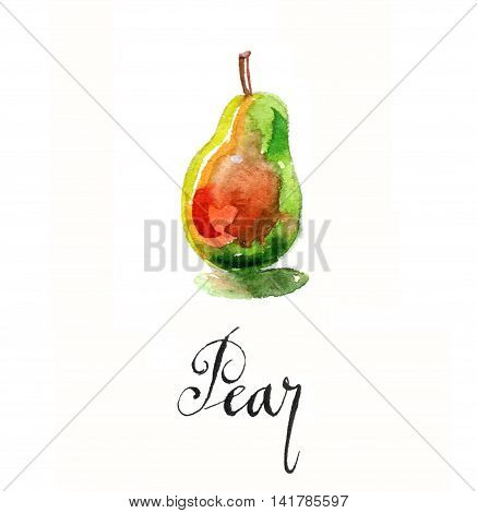 Red-green pear, hand drawn watercolor - Illustration