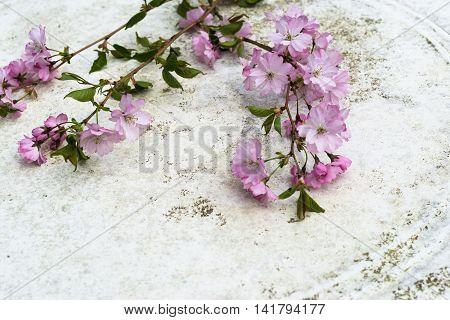 Aerial View Pink Japanese Prunus Serrulata Branches On Vintage Table