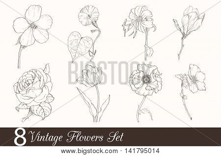 Vector Set of 8 Vintage Drawing Flowers With Tulip, Poppy, Iris, Rose, Magnolia, In Classic Retro Style.