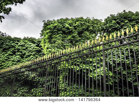 wrought iron fence with spearhead design against tall bushes