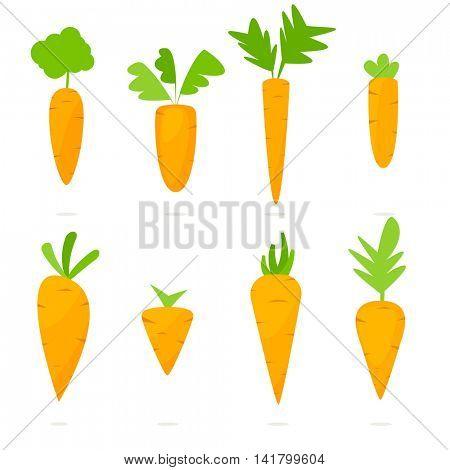 carrot vector set