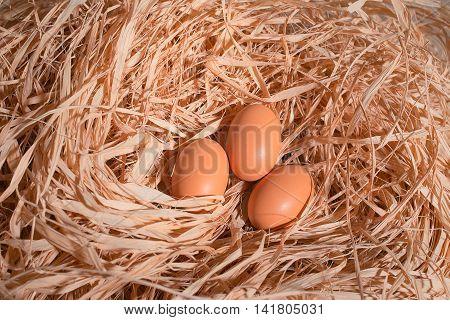 three eggs in a nest of straw
