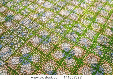 Stone walkway with green moss