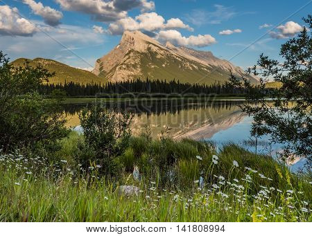 Wildflowers and Mt. Rundle at Vermilion Lakes in Alberta