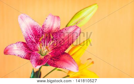 Macro Photography Of Pink Lily Flower On Orange Background