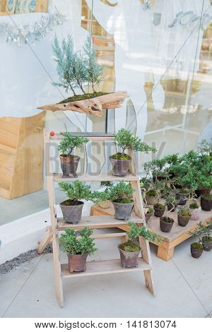 Bonsai Plant Show On Wooden Stair