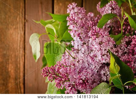 Branch with fresh blooming spring lilac flowers, on wooden background.