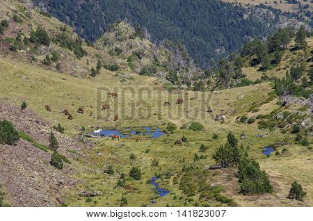 Horses Grazes On Meadow In Mountain Valley In Pyrenees Near Coma Pedrosa Peak. Andorra