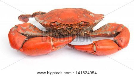 Big Boiled crab isolated on white background