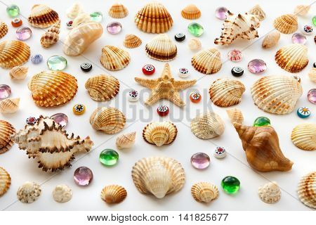 composition of different sea shells and glass beads on a white background. Soft Focus Selective Focus