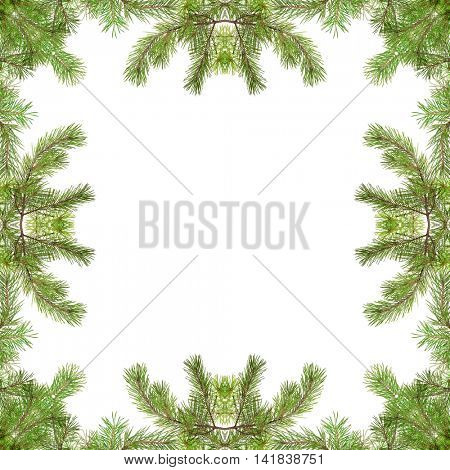 green pine branches frame isolated on white background