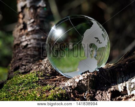Green globe sphere in the woods on moss. The concept of ecology the environment the protection of forests