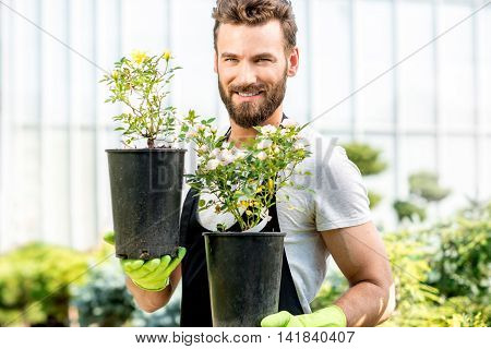 Portrait of a handsome gardener in apron holding pots with flowers in the greenhouse. Plant seller taking care of flowers in the shop